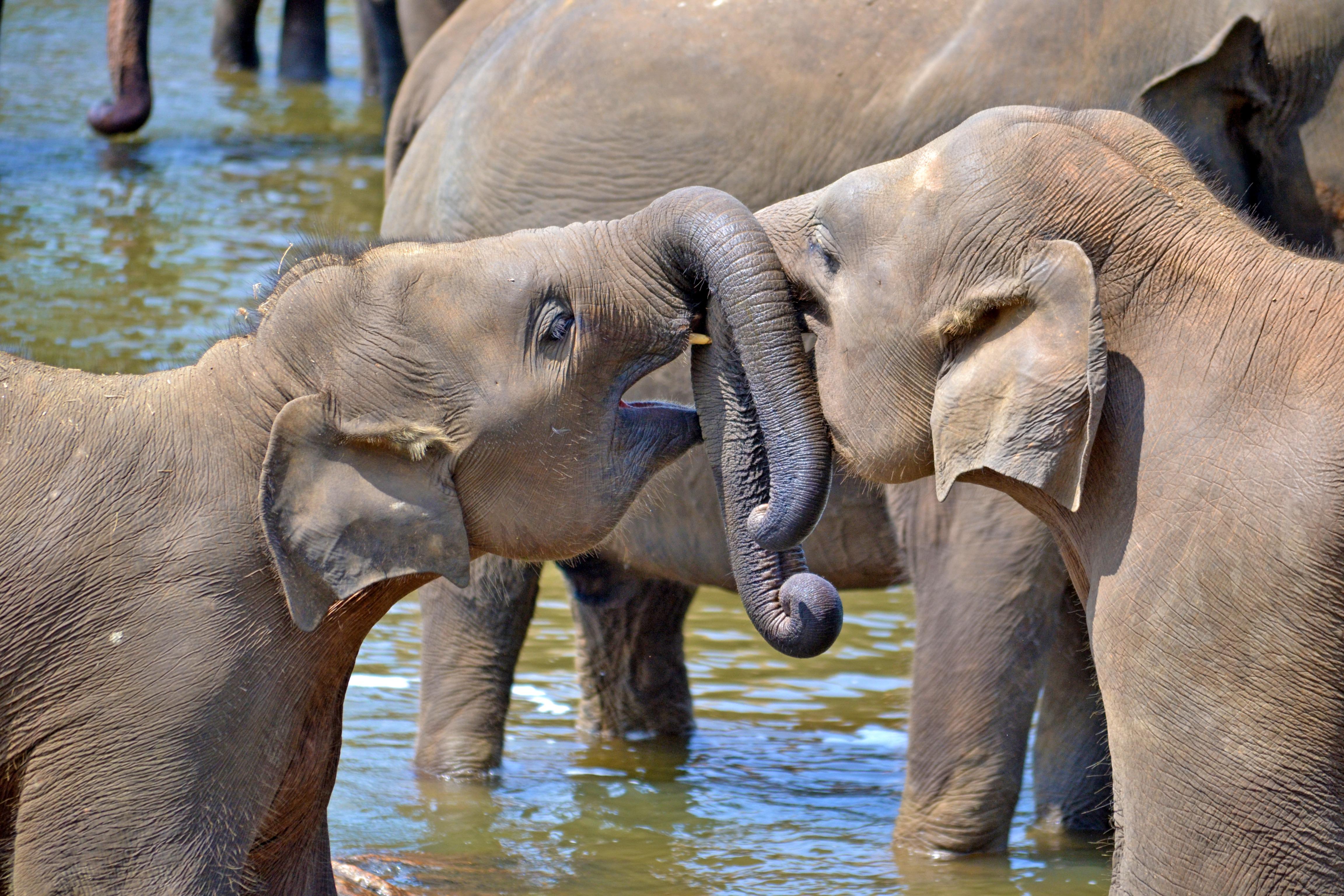 Sri Lanka - Elephants